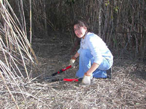 Lehman High National Honor Society member Edith Diaz slices away at a forest of cane at the NHS December, 2006, workday.